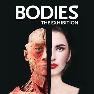 Bodies_The_Exhibition_Attraction_Category