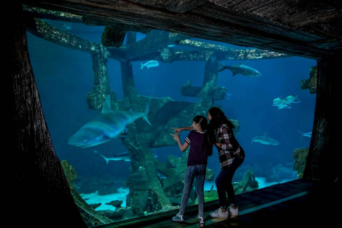 Shark Reef Aquarium Promo Code