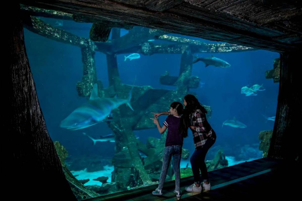 Shark Reef Aquarium Promo Code