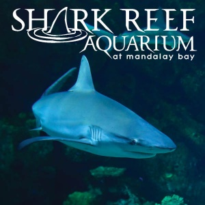 Shark_Reef_Attraction_Category