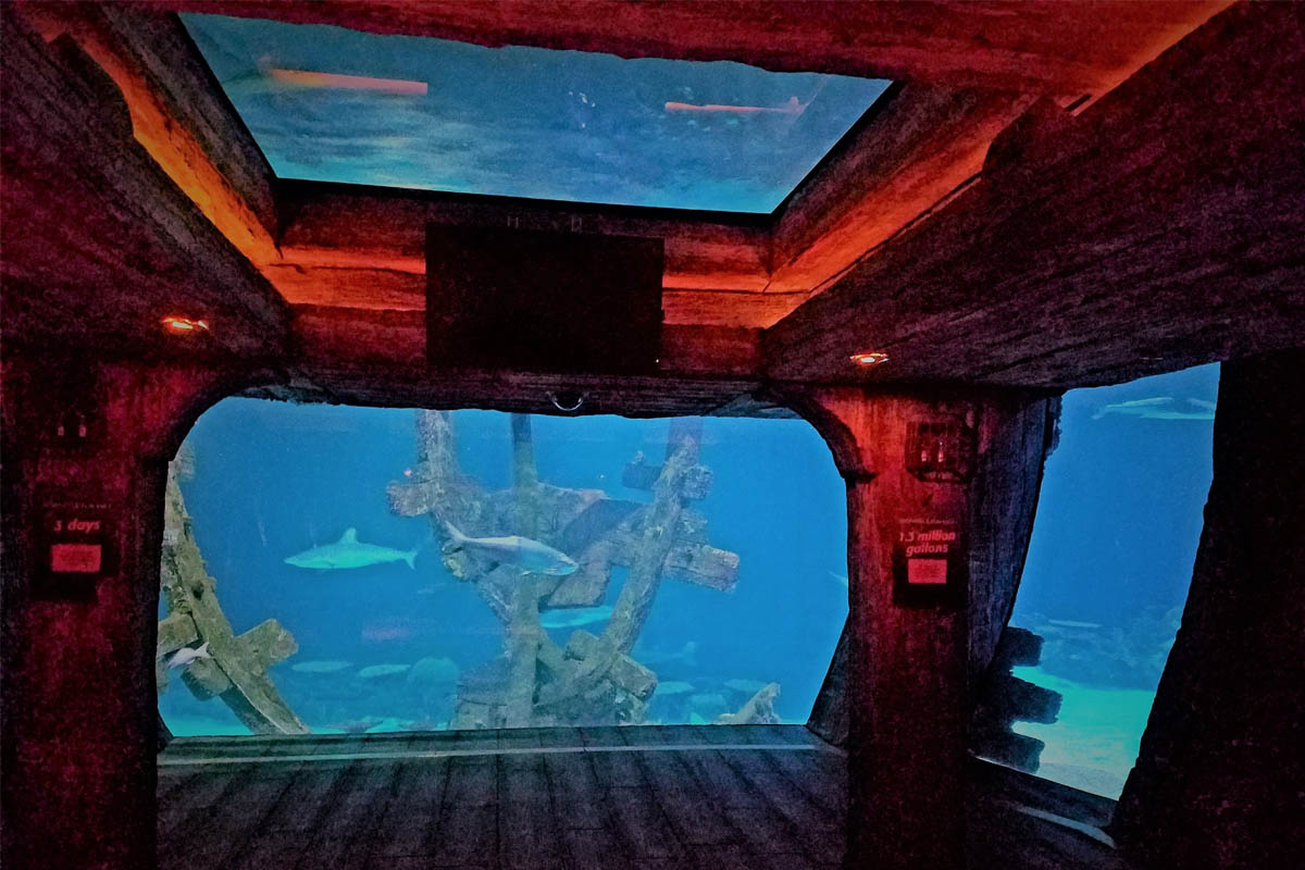 Shark_Reef_Attraction_Photo_1